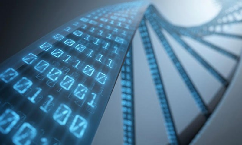 DNA manusia