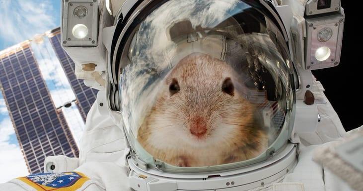 Ilmuwan Berhasil Membuat Tikus Lumpuh Bisa Berjalan Lagi