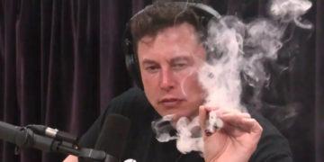 Elon Musk Kapok