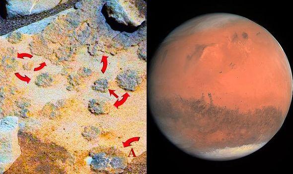 Ada Tumbuhan di Mars, Bukti Kehidupan Alien Nyata?