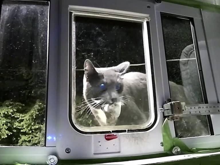 Insinyur Amazon Ciptakan Pintu Kucing dengan AI, Gunanya?