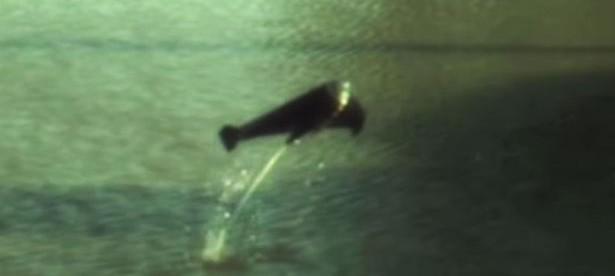Unik! Robot Ikan Ini Bisa Melompat dari Air dengan Kentutnya