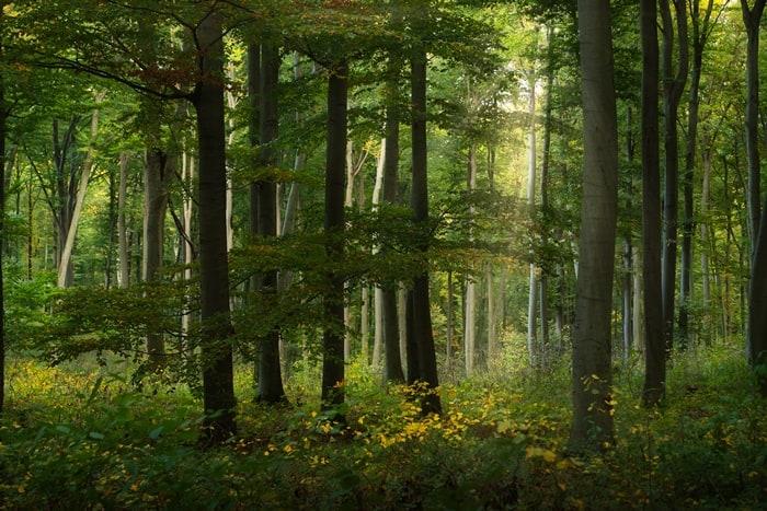 Selamatkan Bumi, Para Youtuber Bersatu Tanam 20 Juta Pohon