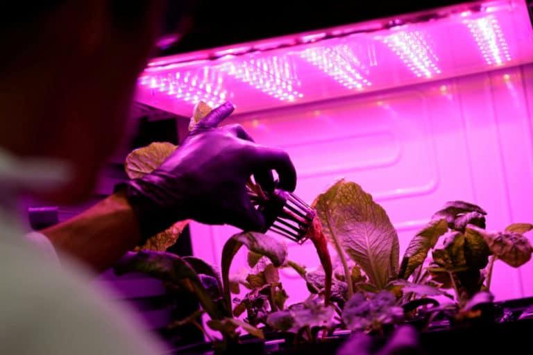 Ilmuwan Ceko Panen Sayuran dari Kebun di 'Planet Mars'