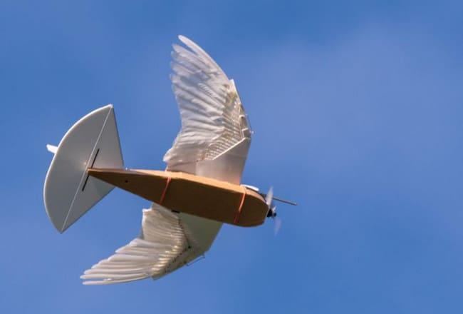 Robot Burung Ini Berbulu dan Terbang seperti Burung Merpati