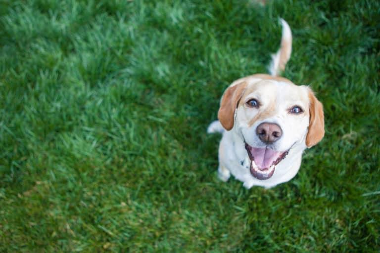 CussCollar, Alat Canggih untuk Bantu Anjing Memaki Majikan