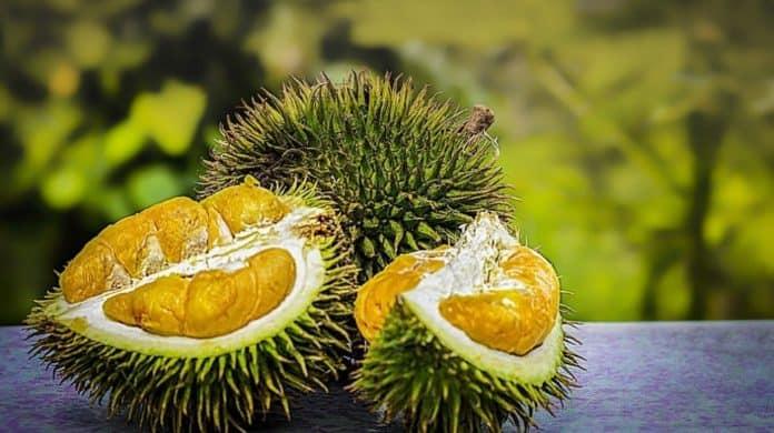 Durian baterai