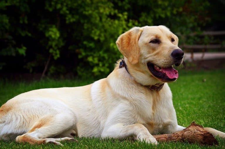 Tak Rela Ditinggal Mati, Pasangan Ini Kloning Anjing Kesayangan