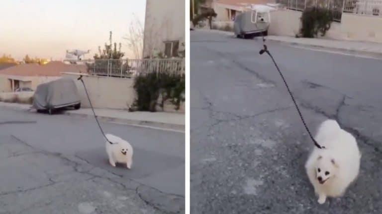 Takut Corona, Anjing Peliharaan Jalan-jalan dengan Drone