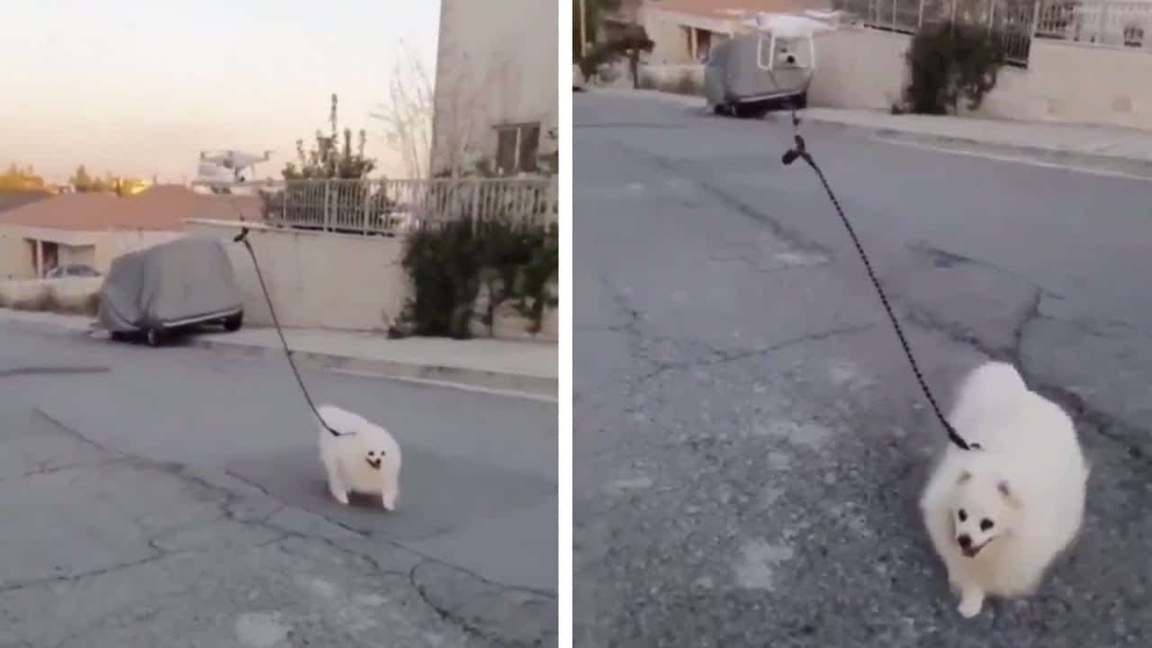 Drone anjing