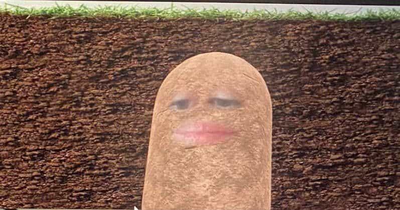 Rapat Online kentang