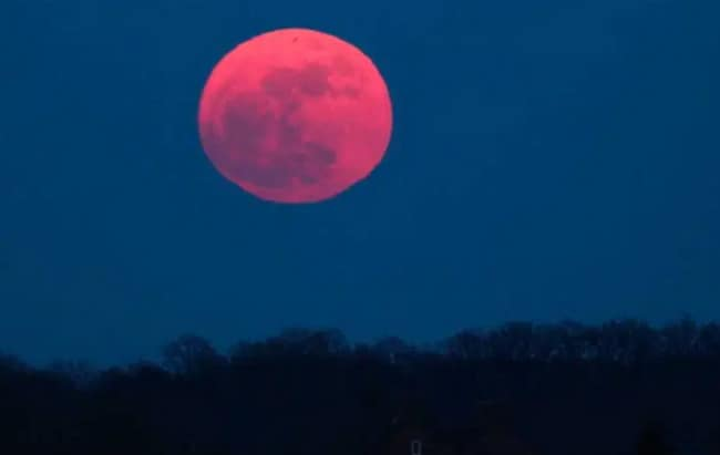 Bulan Purnama Strawberry