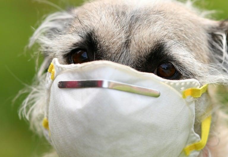 Di Spanyol, Anjing Dilatih untuk Deteksi Virus Corona