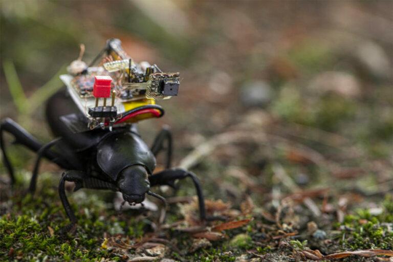 Kumbang Ini Bawa Ransel Kamera di Punggungnya, Buat Apa?