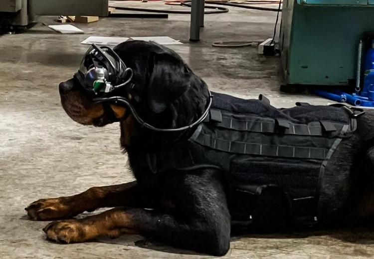 Sangar! Tentara AS Pakaikan Kacamata AR di Anjing Pelacak