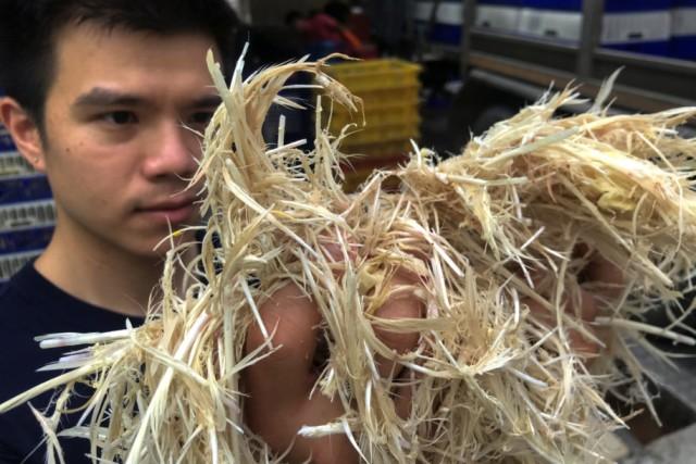 Pemuda Thailand Ini Ubah Bulu Ayam Jadi Makanan Lezat