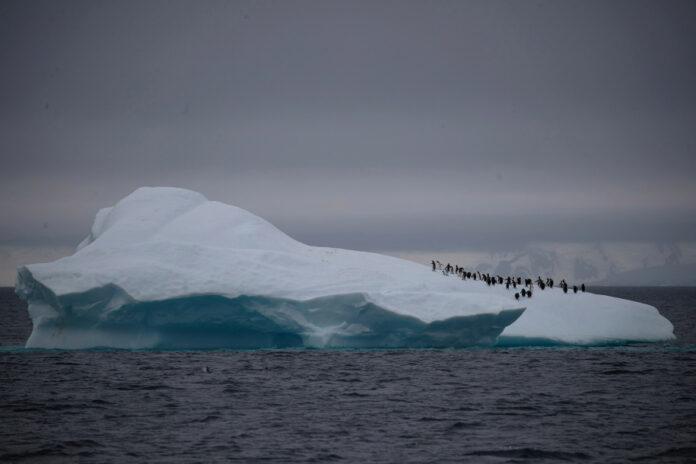 Gempa antartika