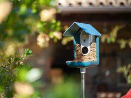 Bird Buddy Alat pengumpan burung